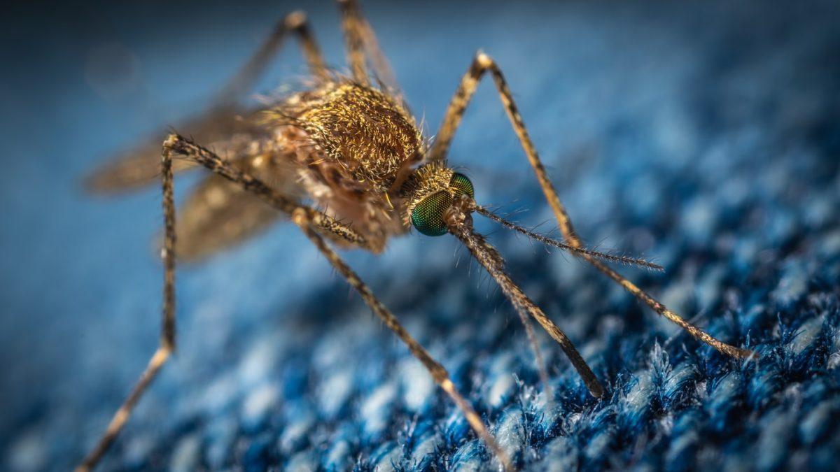 """¿""""Invisible"""" a los mosquitos? EE. UU. desarrolla un repelente que podría logarlo"""