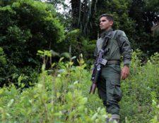 Un policía antinarcóticos monta guardia durante una operación de erradicación en una plantación de hojas de coca en Tumaco, Colombia, el 26 de febrero de 2020.