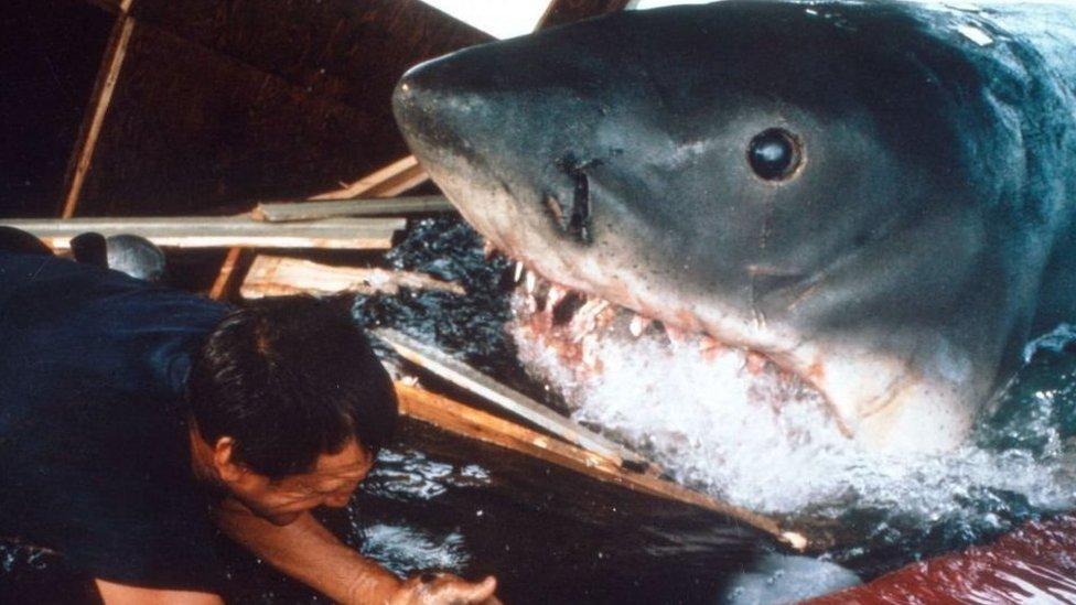 """Peter Benchley: el sentimiento de culpa que hizo que el autor de """"Tiburón"""" dedicara el resto de su vida a proteger a estos animales"""