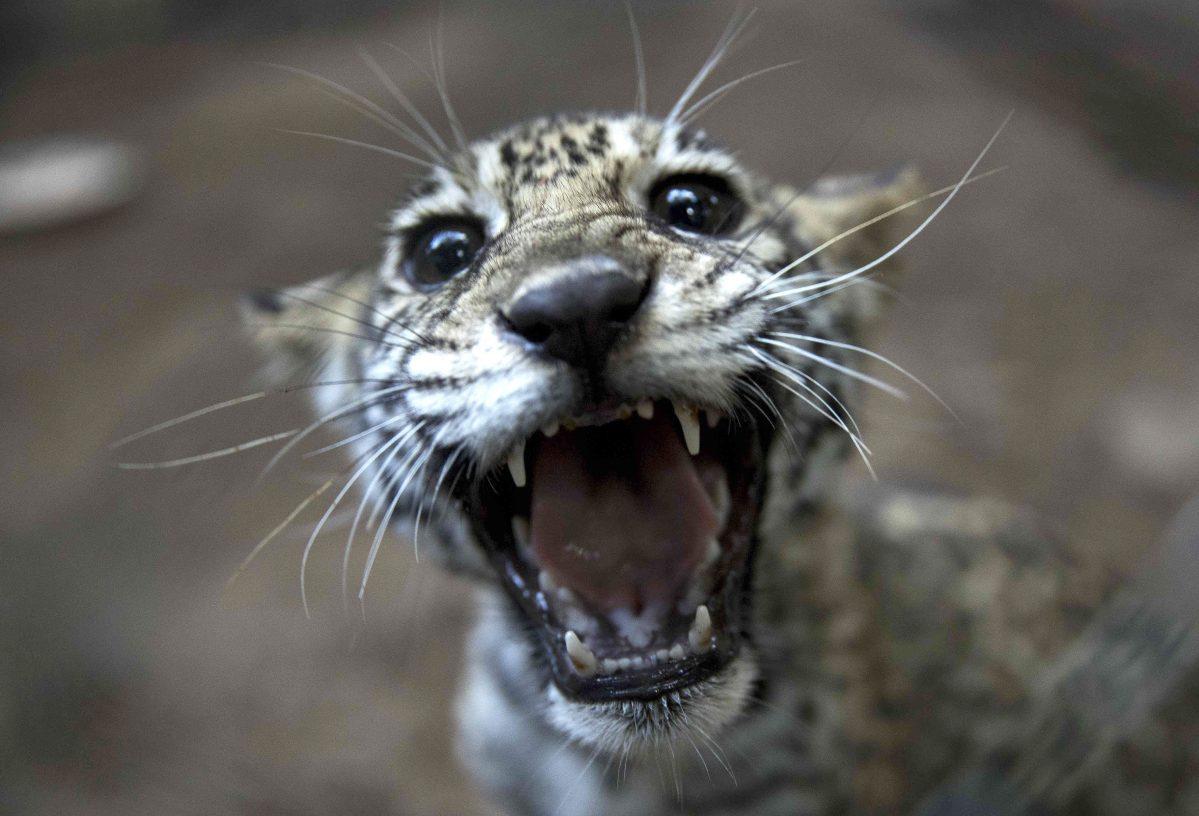 Más de 80 animales son liberados en Nicaragua por el Zoológico Nacional