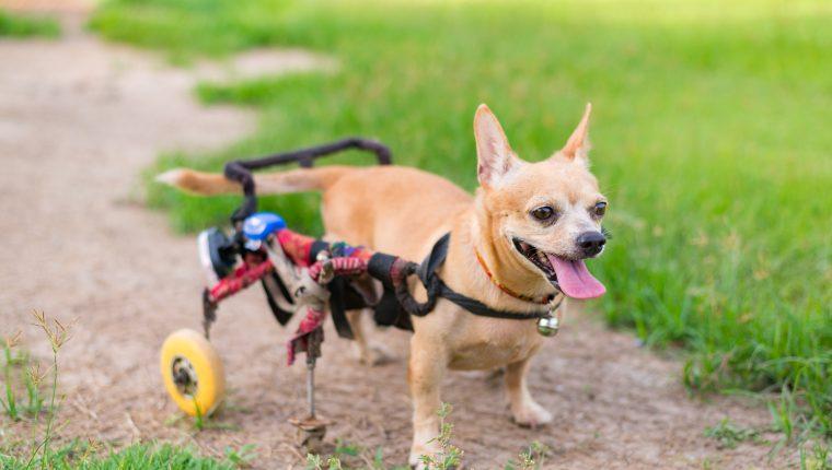 Cuidados de perros y gatos con discapacidad