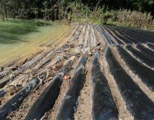 Analistas en suelos consideraron necesario y urgente la asistencia técnica de las instituciones de gobierno para apoyar con la evaluación física y química de los suelos de las áreas afectadas. (Foto Prensa Libre: Cortesía Maga)