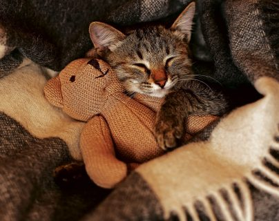 Tips para consentir a tu gato en su día