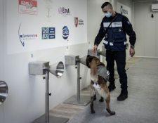 la aptitud de los perros deberá demostrarse en un ensayo clínico. (Foto Prensa Libre: AFP)