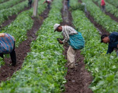 Productos agrícolas  han aumentado la demanda durante la pandemia lo que afecta también los precios. (Foto, Prensa Libre: Hemeroteca PL).