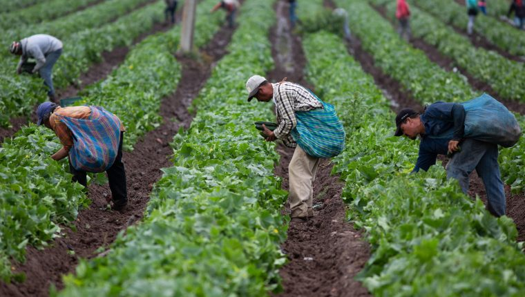 Cómo el agro guatemalteco se las ingenió en 2020 para crecer con fondos propios (y poco crédito)