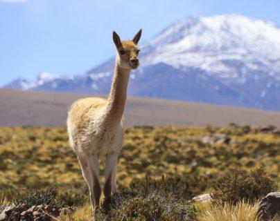 Atacama es el lugar más seco de la tierra, exceptuando algunos valles antárticos.