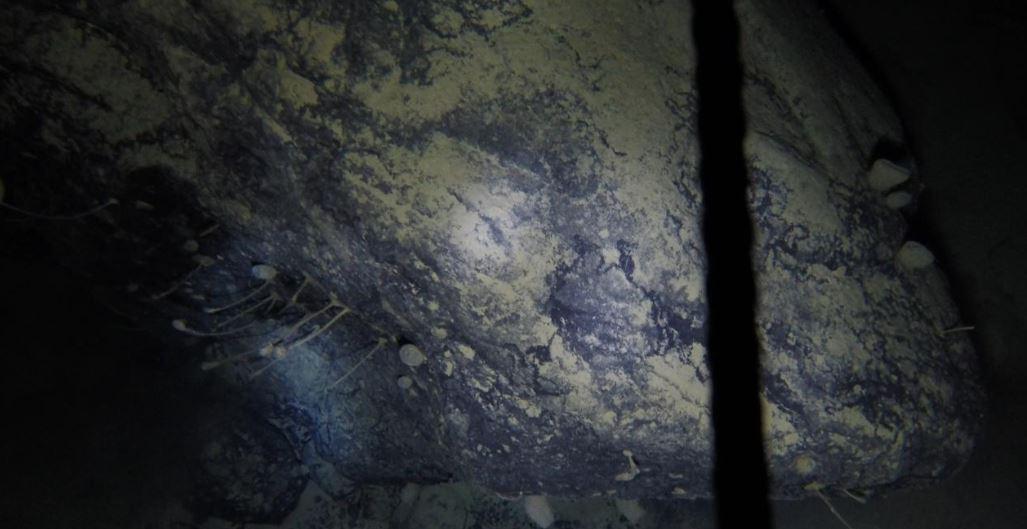 Animales similares a las esponjas entre las extrañas criaturas descubiertas bajo las plataformas de hielo de la Antártida