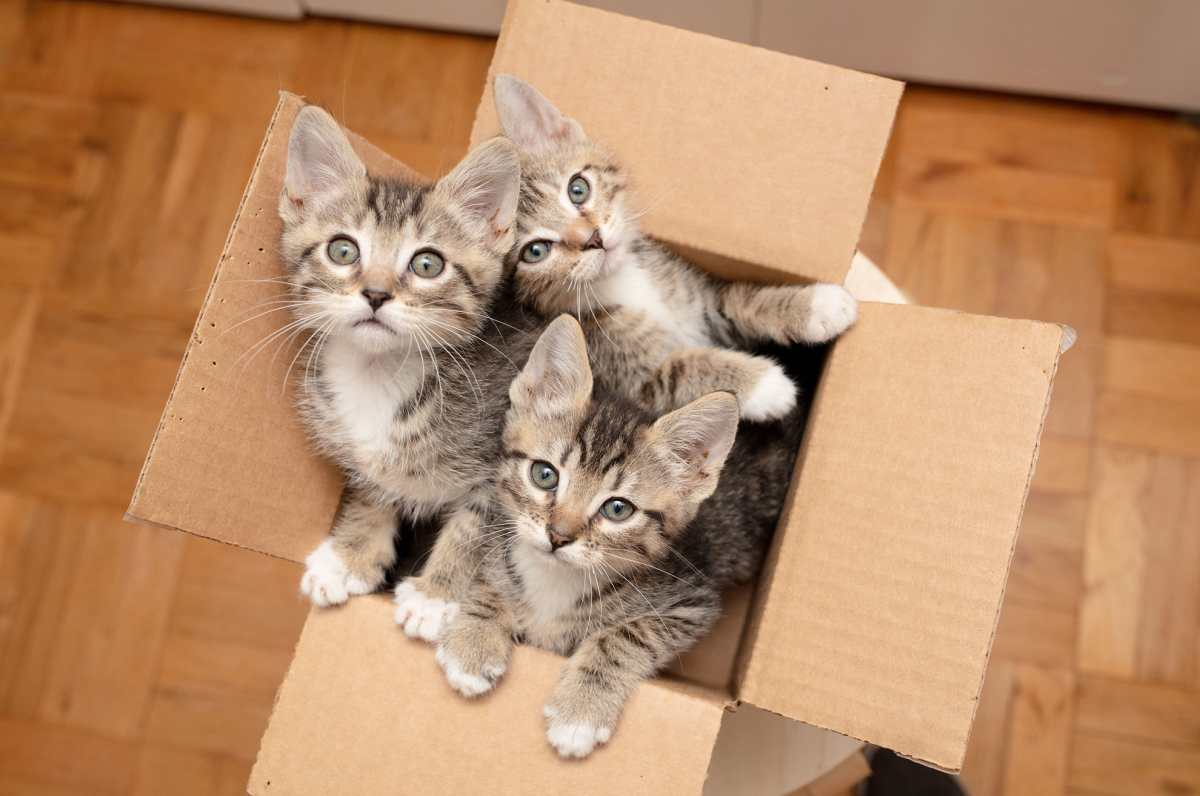 ¡Los gatos también necesitan ser rescatados!