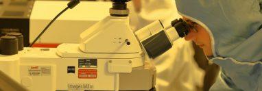 Las células 'natural killer' son un tipo de linfocitos del sistema inmunitario importante para reconocer y eliminar células infectadas por virus o bacterias. (Foto Prensa Libre: Unsplash)