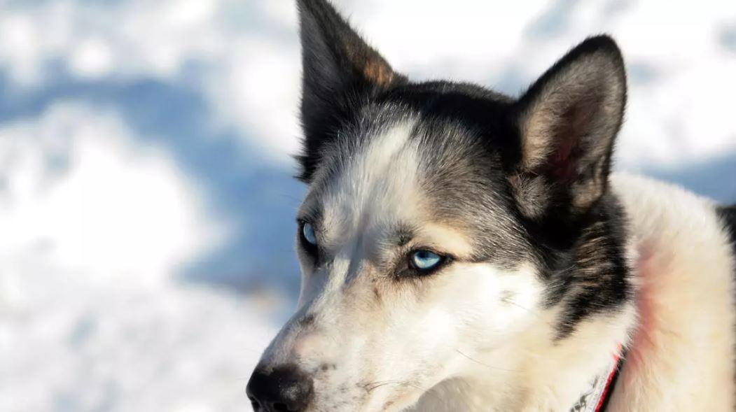 Cuál fue el hallazgo que demuestra que los primeros seres humanos que llegaron a América del Norte iban acompañados de perros