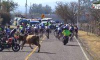 El pelotón del Tour por la paz fue embestido por un toro cuando avanzaba por Jalapa. (Foto Prensa Libre: Captura de pantalla)