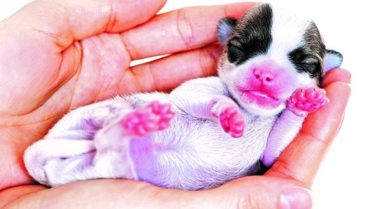 Cómo cuidar a un cachorro de perro huérfano