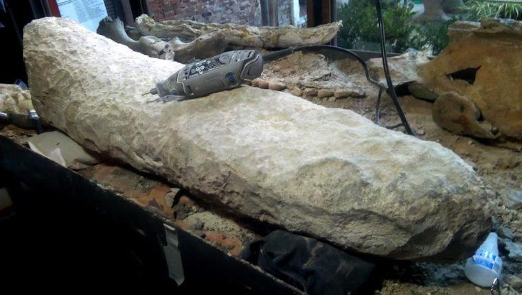 Descubren en Argentina la cola de un armadillo gigante de hace 700 mil años. (Foto Prensa Libre: EFE)