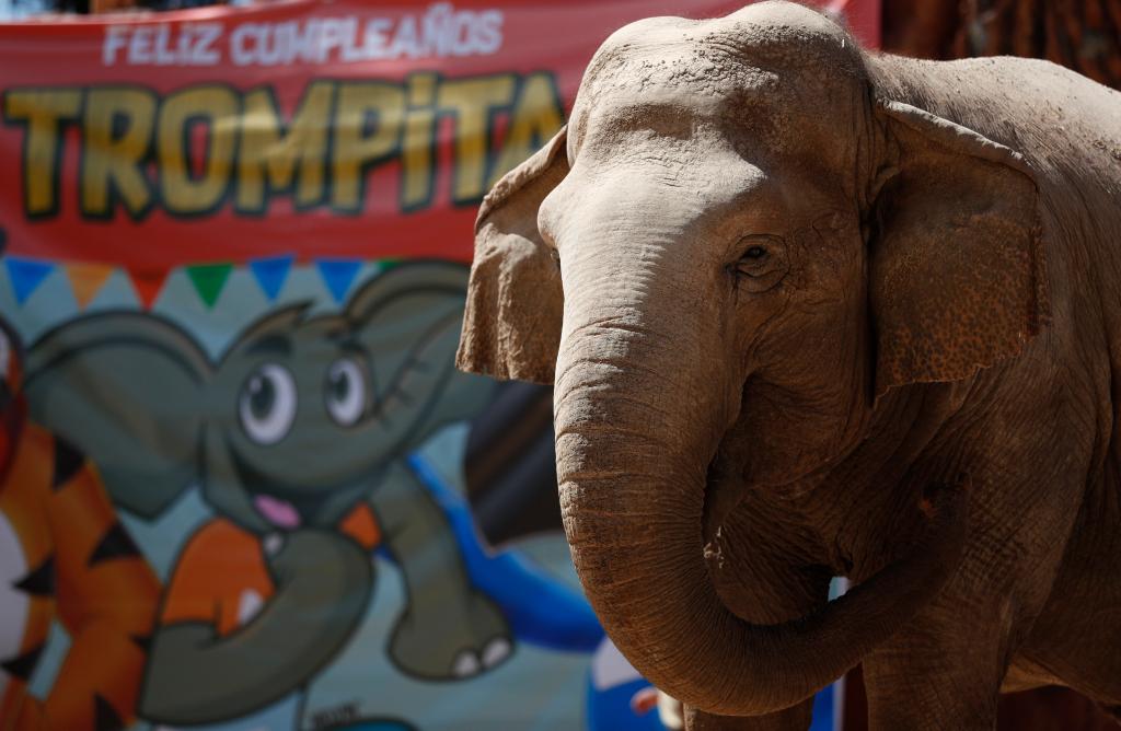 Cuántos elefantes han vivido en el Zoológico La Aurora desde 1957 (historia y curiosidades que quizás no sabía)