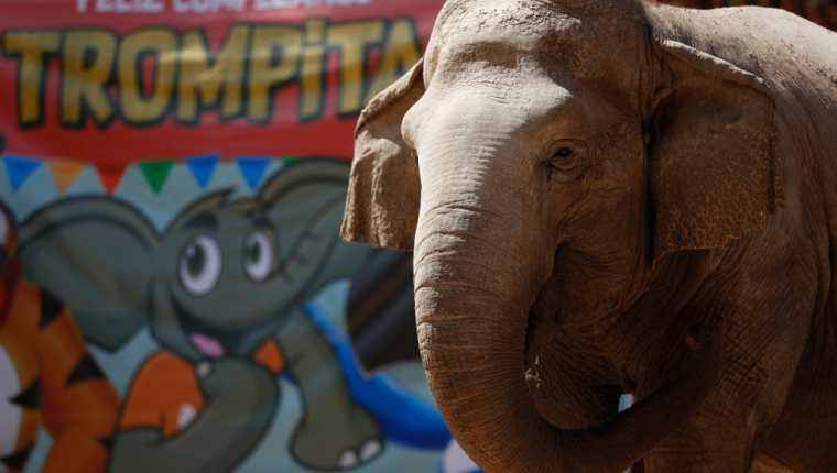 Cada año el Parque Zoológico La Aurora festeja a Trompita con un pastel sorpresa.  (Foto: Hemeroteca Prensa Libre).