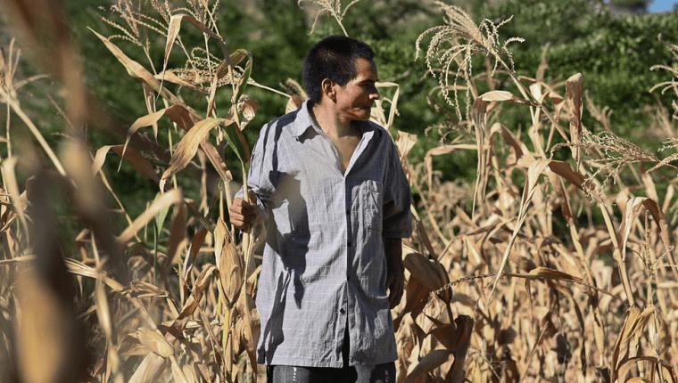 Plantaciones dañadas en Honduras. (VALERIE CAAMAÑO/OXFAM)