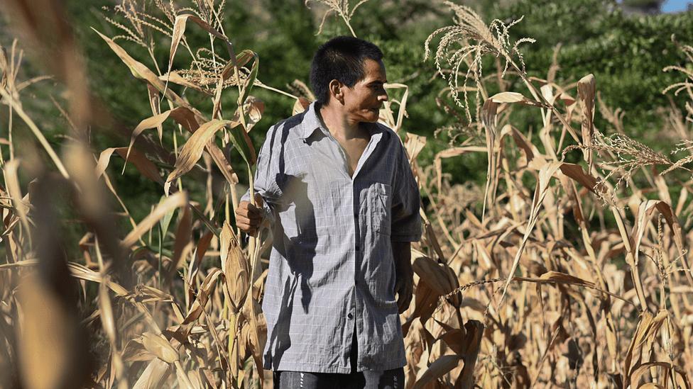 La dramática situación en el Corredor Seco de Centroamérica, donde millones de personas están al borde del hambre y la pobreza extrema por el coronavirus y los desastres naturales