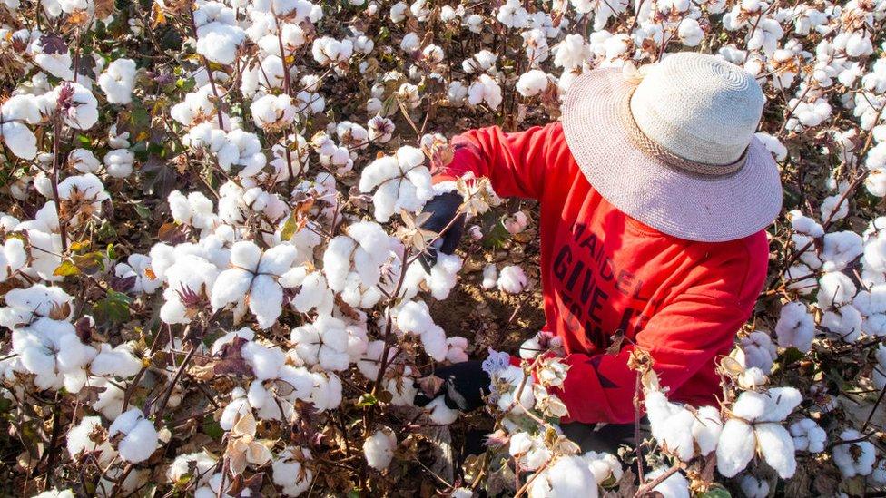 Algodón de Xinjiang: cómo saber si tu ropa está hecha con mano de obra supuestamente esclava en China