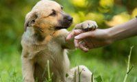 Los perros mestizos son nobles, cari–osos y protectores y padecen menos enfermedades.