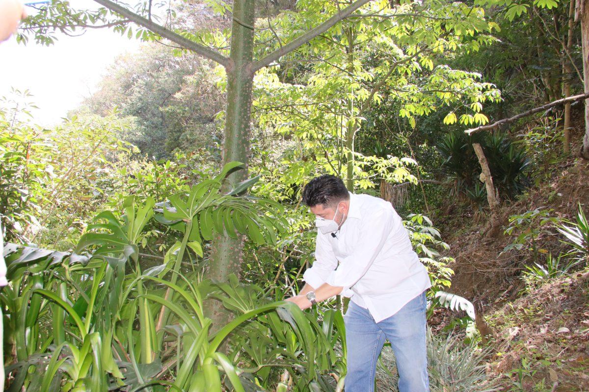 #CambioXelClima: Barranco Las Mercedes, un pequeño pulmón verde en la metrópoli