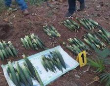 Dos personas resultaron capturadas por extraer 96 unidades de pacayas del Parque Nacional Las Victorias. (Foto Prensa Libre: Diprona)