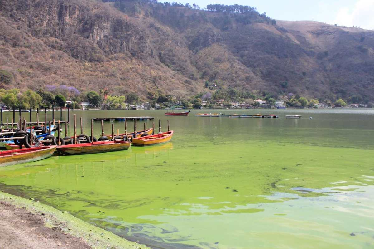Por qué el Lago de Amatitlán se torna verde y azul y por qué la situación podría empeorar