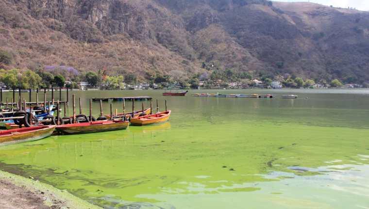 Presencia de algas torna el lago de Amatitlán en un color verde. (Foto: Elmer Vargas)
