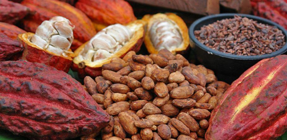 Cinco de los mejores cacaos nacionales representarán a Guatemala en París