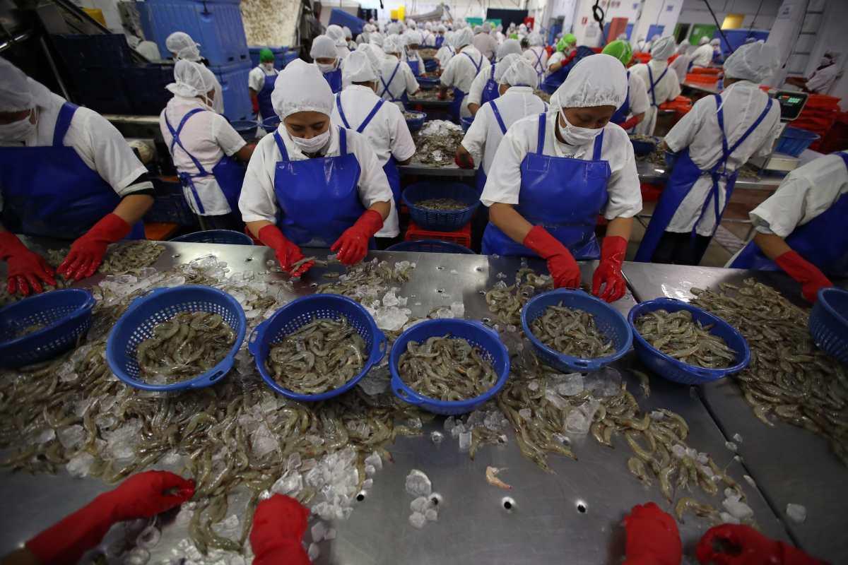 Contrabando y menor consumo: Los desafíos de los productores de pescado y mariscos en 2021