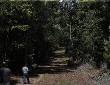Las concesiones se ubican en la Reserva de la Biosfera Maya, que tiene más de dos millones de hectáreas. (Foto: Presidencia)