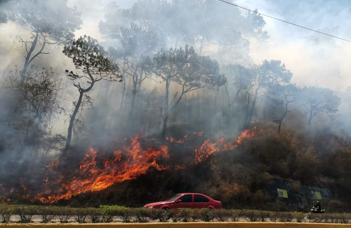 Incendio forestal arrasa área verde en la ruta al Pacífico y complica el tránsito hacia la capital