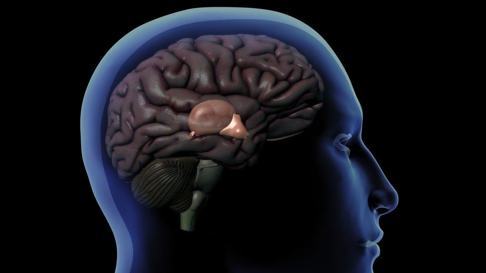 Cómo funciona la glándula pineal, el enigmático órgano que regula nuestro sueño