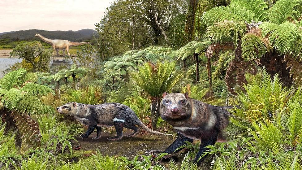 """Así era la """"bestia de cinco dientes"""", el mamífero de la era de los dinosaurios descubierto en la Patagonia chilena"""