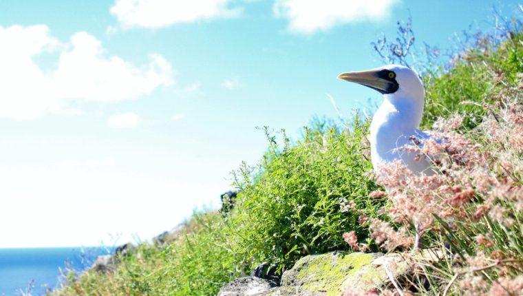 Redonda es la tercera y menos conocida de las islas Antigua y Barbuda.