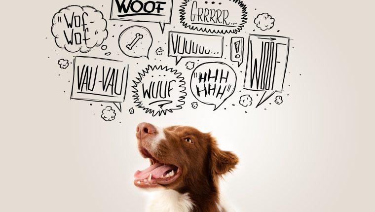 El ladrido es una forma de comunicación de los caninos.  (Foto Prensa Libre: Shutterstock).