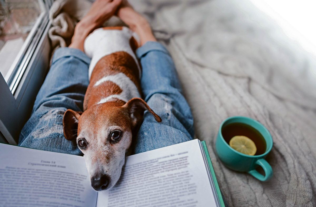 ¿Las mascotas presienten las enfermedades de sus dueños?