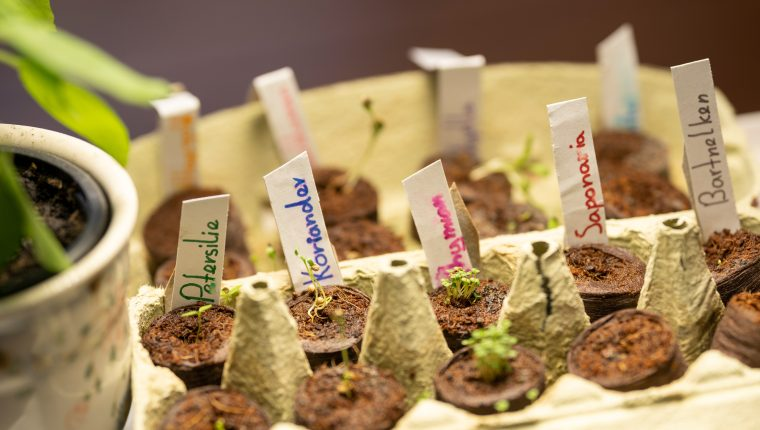 Un proyecto verde para los niños: un minijardín