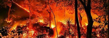 La vegetación de una finca sucumbe al imparable flujo de lava del Volcán de Pacaya. (Foto Prensa Libre: cortesía de Gustavo López)