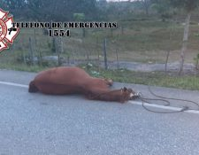 Bomberos Municipales Departamentales informaron este miércoles 7 de abril que una persona murió y otra resultó herida en el caserío Santa Ana, El Chal, Petén, cuando la motocicleta en la que se desplazaban chocó contra un caballo que se atravesó la carretera. (Foto Prensa Libre: Bomberos Municipales Departamentales)