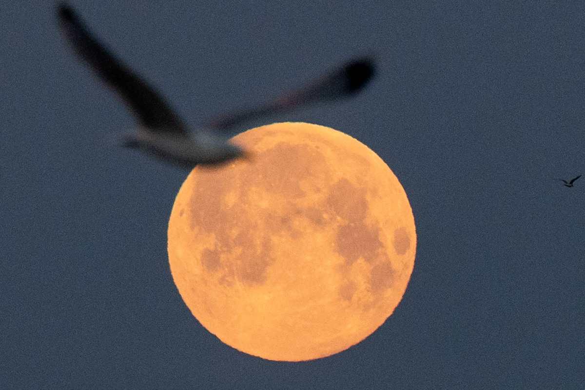 Las cautivadoras imágenes que dejó la noche de superluna en el mundo