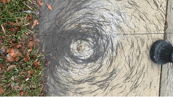"""Qué se sabe del """"tornado"""" de lombrices que desconcierta a científicos"""