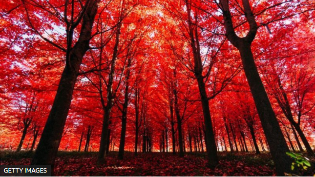 ¿Hace ruido un árbol al caer si nadie está ahí para escucharlo? La respuesta de la ciencia y la filosofía