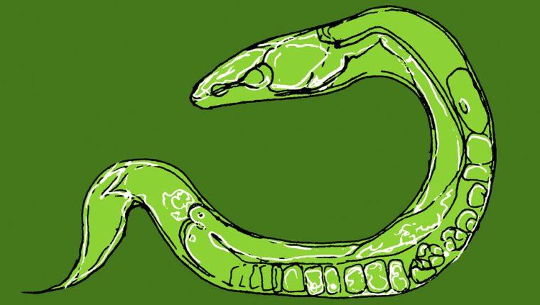 C. elegans, la criatura transparente que ha revelado cosas sorprendentes sobre cómo nuestros cuerpos funcionan… y fallan