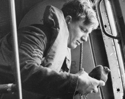 Columba: la ingeniosa operación con palomas mensajeras que espiaron a los nazis en la época más oscura de la Segunda Guerra Mundial