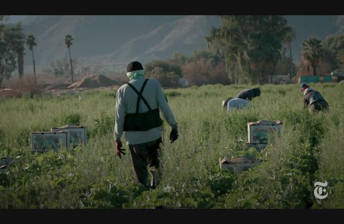 Video:  Cómo llevar la vacuna anticovid a los campesinos migrantes en EE. UU.