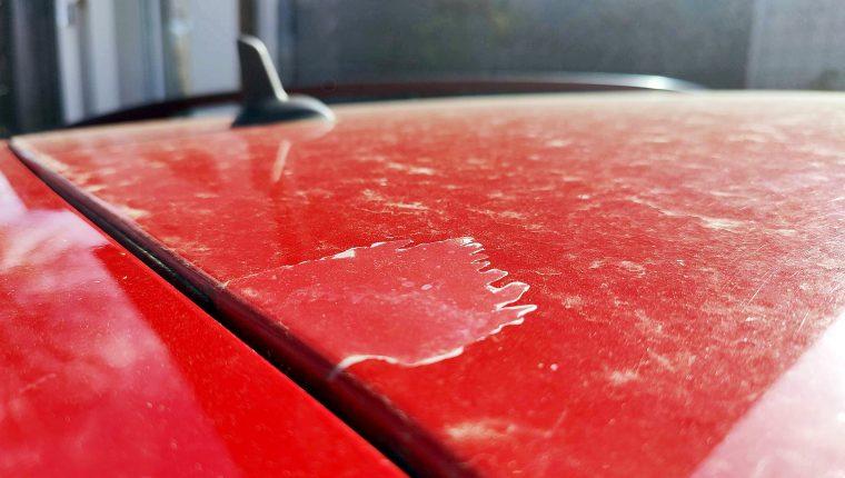 Cómo eliminar los excrementos de aves del coche