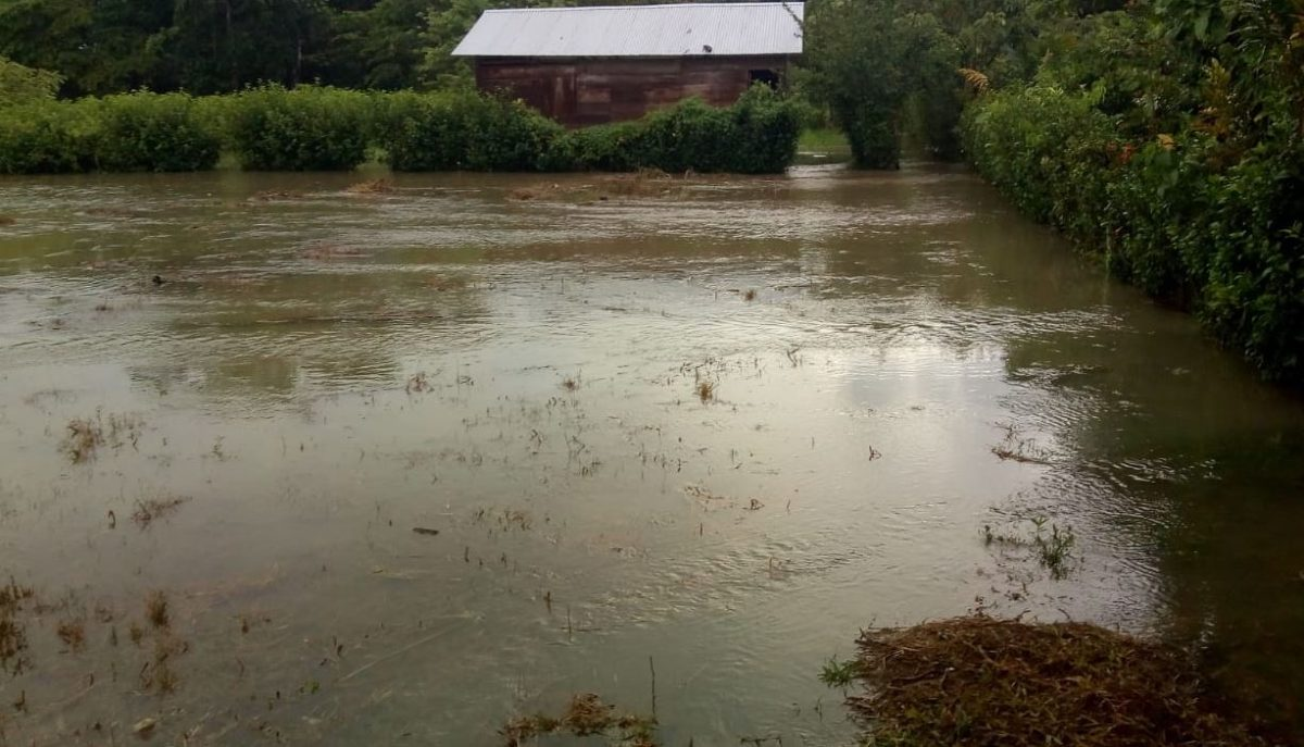 Más de 2 mil 300 personas afectadas y 415 casas con daños dejan las inundaciones en Livingston, Izabal