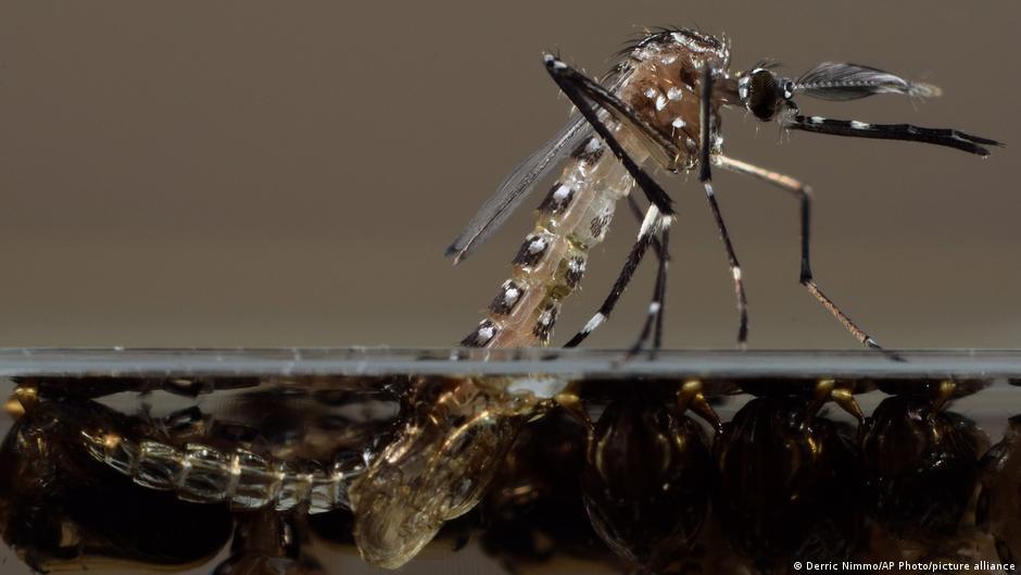 Empresa respaldada por Bill Gates libera miles de mosquitos modificados genéticamente
