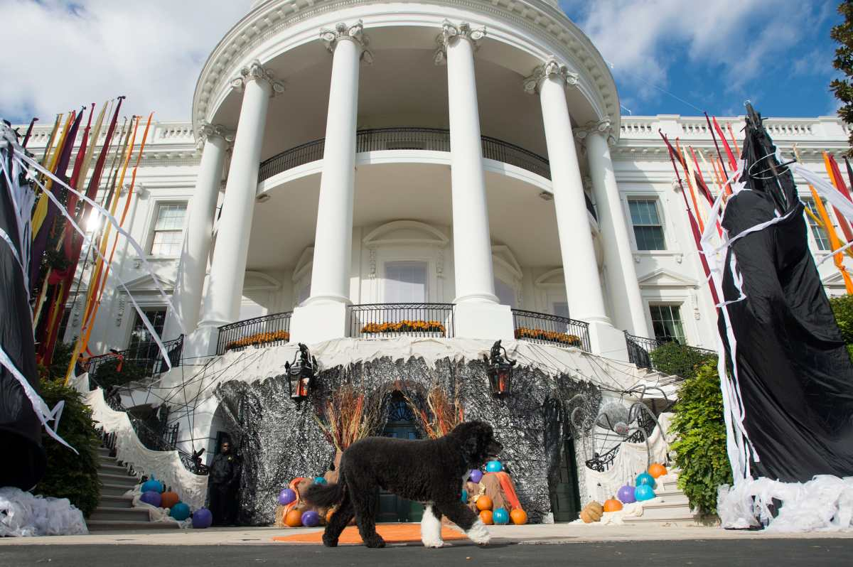 """Muere """"Bo"""", uno de los perros que acompañó a la familia Obama en la Casa Blanca durante casi una década"""